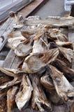 Возглавляет stockfish Норвегию Стоковое Изображение