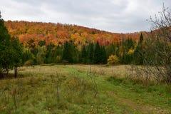 Возглавлять к следу Брюс на Escarpment Ниагары Стоковые Фото