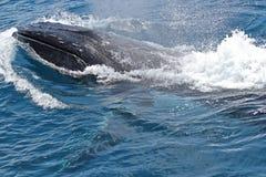 воздух вытесняет humpback Стоковое Изображение