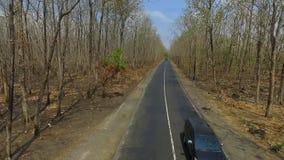 Воздушная дорога леса видеоматериал
