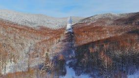 Воздушная предпосылка высокая над снегом зимы покрыла деревья в холодном лесе горы видеоматериал