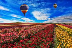 2 воздушного шара летают над полем Стоковые Фотографии RF