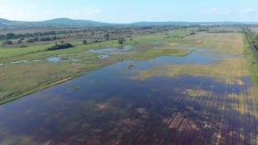 Воздушное аграрное изображение от венгерского ландшафта, около озера Balaton акции видеоматериалы