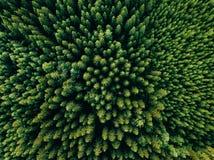 Воздушное взгляд сверху деревьев зеленого цвета лета в лесе в сельской Финляндии стоковое фото rf