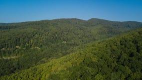Воздушное взгляд сверху деревьев зеленого цвета лета в предпосылке леса, Кавказе, России Стоковое Фото