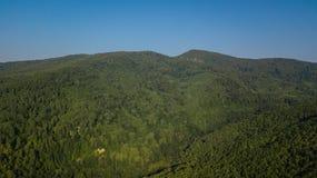 Воздушное взгляд сверху деревьев зеленого цвета лета в предпосылке леса, Кавказе, России Стоковая Фотография
