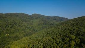 Воздушное взгляд сверху деревьев зеленого цвета лета в предпосылке леса, Кавказе, России Стоковые Изображения