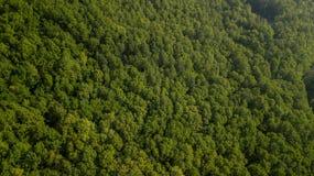 Воздушное взгляд сверху деревьев зеленого цвета лета в предпосылке леса, Кавказе, России Стоковые Фотографии RF