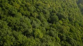 Воздушное взгляд сверху деревьев зеленого цвета лета в предпосылке леса, Кавказе, России Стоковое Изображение