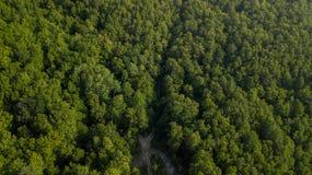 Воздушное взгляд сверху деревьев зеленого цвета лета в предпосылке леса, Кавказе, России Стоковая Фотография RF