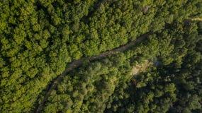 Воздушное взгляд сверху деревьев зеленого цвета лета в предпосылке леса, Кавказе, России Стоковые Фото