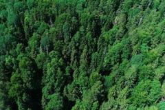 Воздушное взгляд сверху красивых леса и деревьев стоковое изображение