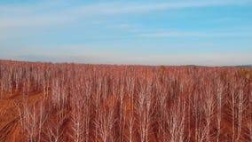 Воздушное взгляд сверху проселочной дороги через поля и леса в лете зажим Взгляд сверху района леса с дорогой акции видеоматериалы