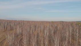 Воздушное взгляд сверху проселочной дороги через поля и леса в лете зажим Взгляд сверху района леса с дорогой сток-видео