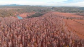 Воздушное взгляд сверху проселочной дороги через поля и леса в лете зажим Взгляд сверху района леса с дорогой видеоматериал