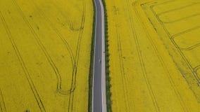 Воздушное видео автомобиля идя на дорогу асфальта между полями рапса семени масличной культуры видеоматериал