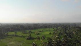 воздушное видео летания трутня 4K тропического ландшафта с рисом fields Остров Бали акции видеоматериалы