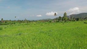 воздушное видео летания 4K зеленого риса fields близко к вулкану Agung, острову Бали стоковое изображение rf