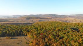 Воздушное видео трутня 4k ландшафта осени Горы и пуща акции видеоматериалы
