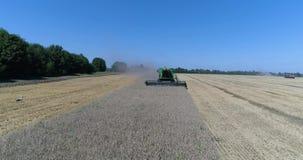 Воздушное вид спереди управлять зернокомбайном во время сбора пшеницы на поле видеоматериал