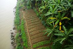 Воздушное земледелие фото в Азии стоковое фото