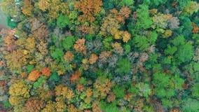 Воздушное фотографирование - ботанические цвета осени акции видеоматериалы