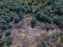 Воздушное фотографирование, обезлесение Воздушное фото ущерба окружающей среде Стоковое Изображение