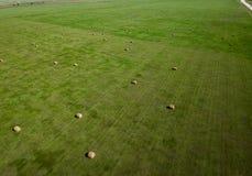 Воздушное фотографирование поля связки сена в земледелии Южной Дакоты стоковые фотографии rf