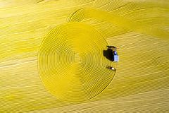 Воздушное фото сбора падиа в сельском Китае Стоковая Фотография RF