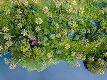 Воздушное фото Alappuzha Индии стоковая фотография