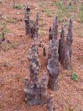 Воздушные корни облыселого кипариса Стоковая Фотография RF