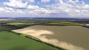Воздушный взгляд переднего движения трутня широкий на сельском ландшафте сельской местности акции видеоматериалы