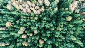 воздушный взгляд пущи Стоковое Изображение