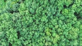 Воздушный взгляд сверху деревьев лета зеленых в лесе, отснятом видеоматериале трутня сток-видео