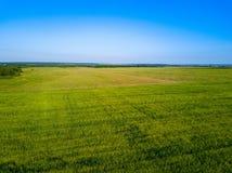 Воздушный взгляд трутня зеленого поля, ширей России стоковые фотографии rf