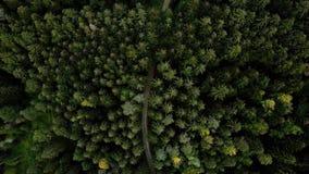 Воздушный взгляд трутня ландшафта лесных деревьев в лете 4K акции видеоматериалы