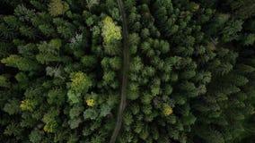 Воздушный взгляд трутня ландшафта лесных деревьев в лете 4K сток-видео
