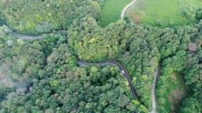 Воздушный взгляд трутня: Полет над лесом и проселочной дорогой сосны в свете захода солнца мягком Горная цепь в предпосылке сток-видео