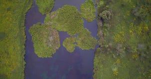 Воздушный взгляд трутня травы озера стран и зеленых островов озера от тросточки Reed сток-видео