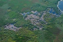 Воздушный вид с воздуха над колонией белых пеликанов Стоковое Изображение