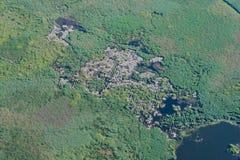 Воздушный вид с воздуха над колонией белых пеликанов Стоковая Фотография RF