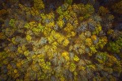 Воздушный вышеуказанный взгляд леса осени стоковые фото