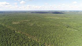 Воздушный красивый вид зеленого ландшафта леса с небом и лесом стоковые фото