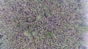 Воздушный лес Nypoideae на юге Таиланда стоковая фотография rf