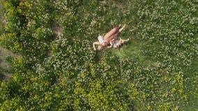 Воздушный: Молодая белокурая мать hippie имея качественное время кладя лежать с ее ребятами на поле одуванчика парка - сток-видео