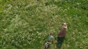 Воздушный: Молодая белокурая мать hippie имея качественный идти и ход времени с ее ребятами на поле одуванчика парка видеоматериал