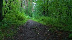 Воздушный низкий уровень мухы под деревьями над путем в лесе в осени акции видеоматериалы