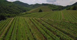 Воздушный отснятый видеоматериал винодельни ландшафта земледелия виноградника сельской местности в Словении Европе акции видеоматериалы