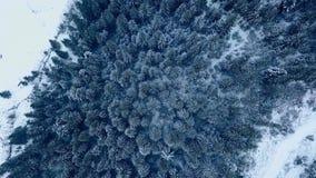 Воздушный отснятый видеоматериал леса ели зимы в горах Взгляд сверху сосен покрытых со снегом Quadcopter сток-видео