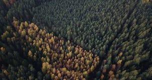 Воздушный отснятый видеоматериал леса зеленой сосны и желтой березы, медленно сползая над верхними частями деревьев - унылого вид сток-видео